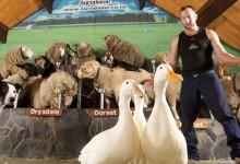 罗托鲁瓦旅游景点爱哥顿农场Agrodome
