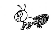如何有效控制花园中的蚂蚁数量?