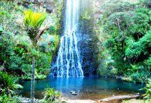 奥克兰仙女瀑布 Fairy Falls