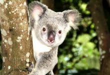 新西兰公民在澳大利亚定居可以获得什么福利?
