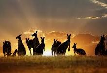 新西兰公民可在澳洲享受的福利