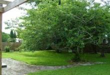 在新西兰如何修剪自家院子的树木