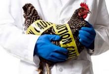 禽流感Avian Influenza