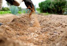"""花园有机肥料""""血粉""""和""""骨粉""""是什么?"""