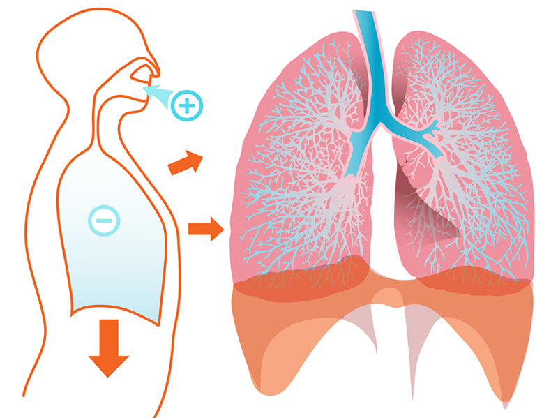 breathing-respiration-difference