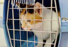 如何从新西兰自助办理宠物托运回中国大陆?