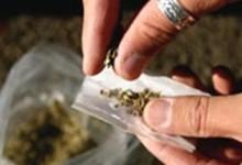 新西兰的大麻Marijuana