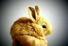 如何在新西兰饲养宠物兔子?