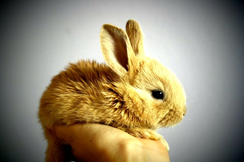 care-pet-rabbit-in-your-house