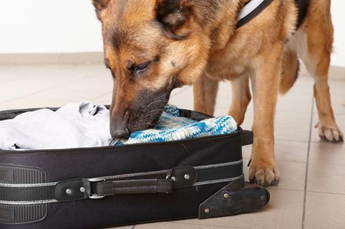 cash-sniffing-dog