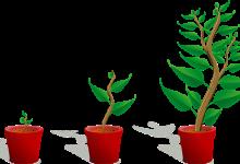 如何给盆栽植物更换新花盆?