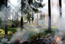 新西兰干旱季节注意野外用火安全