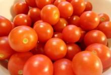 樱桃西红柿Cherry Tomato是转基因品种吗?
