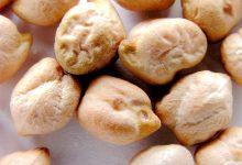 新西兰餐饮中的鹰嘴豆 Chickpea