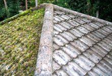 屋顶长草要不要清除?