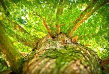 邻居家的树木枝杈侵犯自家后院的处理办法