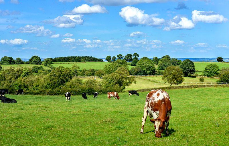 dairy-farm-job-description-template