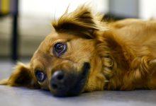 """关于""""狗""""的一些常用英语俚语"""