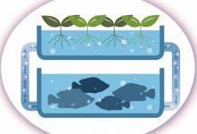 新西兰家用鱼菜共生系统需要申请执照吗?