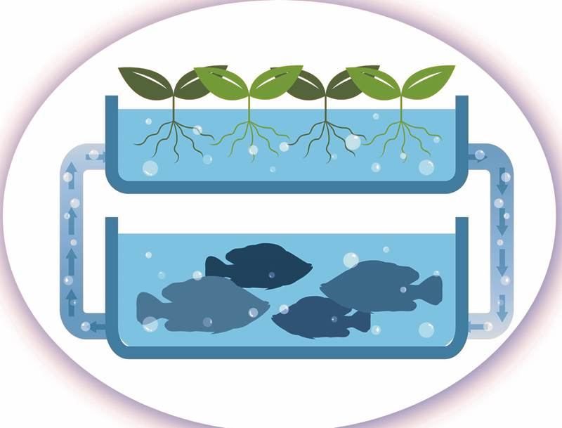 domestic-aquaponics