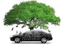 为什么夏季新西兰不要把汽车停在大树下面?