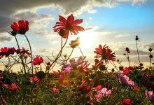 为什么连续干燥的空气让花粉过敏变得更严重?