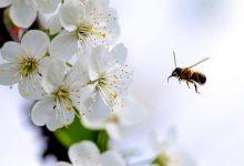 在新西兰,减轻花粉症的困扰