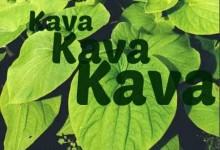 斐济特产卡瓦酒Kava Kava
