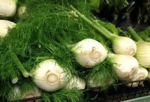 新西兰超市中的蔬菜茴香 Fennel