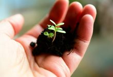 如何使用石灰改善花园中的土壤?