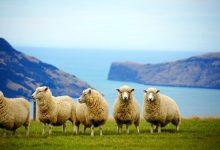 新西兰中国旅游年在惠灵顿举行庆祝活动