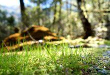 新西兰部分步道小木屋和露营地国际游客收费高于本地游客