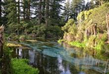 罗托鲁阿冷泉公园Hamurana Springs