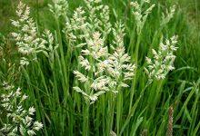 新西兰十一月份容易导致过敏的花粉