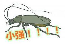 新西兰家庭害虫蟑螂Cockroach