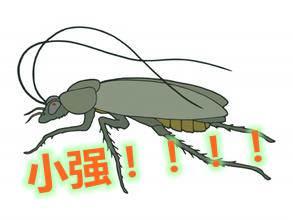 home-n-garden-cockroach