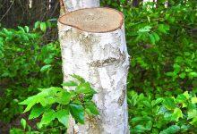 新西兰法官将根据什么判决土地上的树木可以移除或修剪?