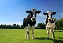 新西兰有多少乳制品农场?