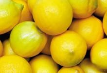 如何在花园种植柠檬树?