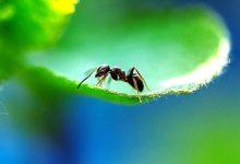 如何驱赶室内植物花盆中的蚂蚁?