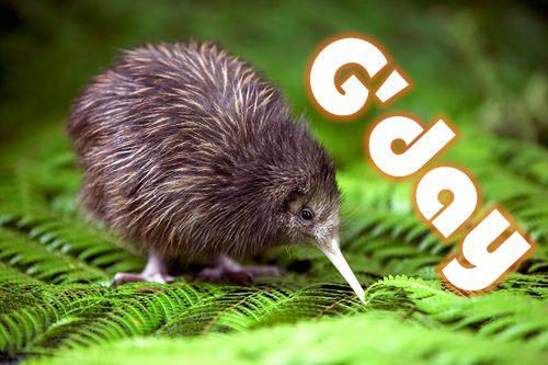 kiwi-gday