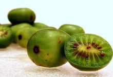 新西兰软枣奇异果Kiwiberry