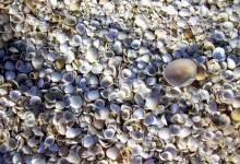 新西兰海边的贝壳可以随便捡吗?
