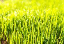 新西兰冬季花园草坪应该多久维护一次?