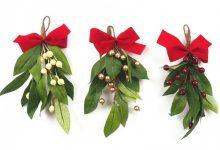 圣诞节的重要元素槲寄生 Mistletoe