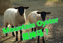 [短百科]新西兰俚语Mountain Oyster