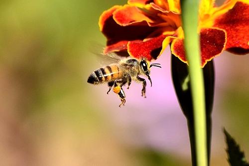 mpi-lowerdown-manuka-honey-export-rules