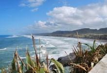 奥克兰鸟岛 Muriwai Beach