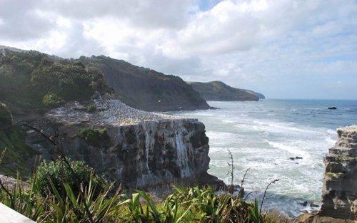 muriwai-beach2