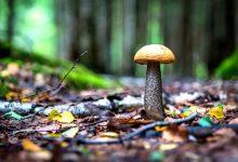 新西兰工作场合中的搞笑说法 Mushroom Department